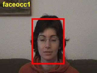 FaceOcc1